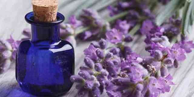Best Essential Oils Good for Itchy Skin